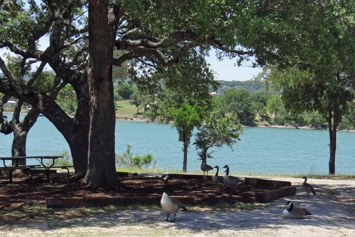 Geese At Boat Ramp.jpg